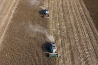 Harvesting of sunflower seeds, aerial view