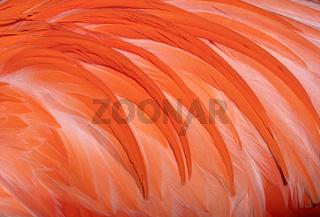Background image, feathers