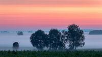 Morgendaemmerung ueber dem Donaumoos in Bayern