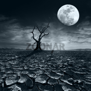 Lonely dead tree at full moon night at desert