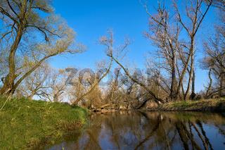 Naturlandschaft mit Weiden am Fluss Ehle bei Biederitz
