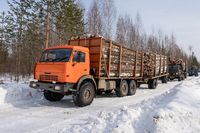 Trucks loaded with timber move out of woods