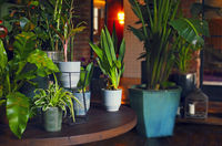 Potted plants on table at home
