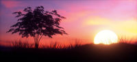Colorful Sunset with tree panoramic
