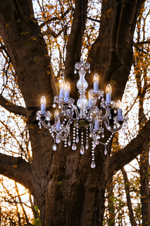 Crystal Chandelier in the forest