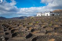 LANZAROTE, SPAIN - December, 12, 2017: La Geria vineyards and winery on volcanic soil of Lanzarote, Canary Islands.