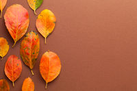 Autumn Minimal Background With Orange Leaves
