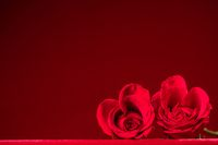 Hearts of red roses