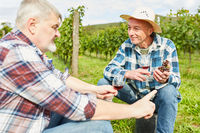 Zwei Weinbauern diskutieren über die Weinernte
