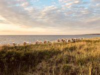 Strandkörbe an der deutschen Ostseeküste