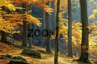 Felsen im Buchenwald - rock in beech forest 03
