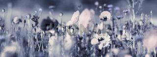 mohn- und kornblumen panorama, trauer