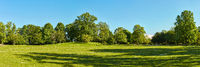 Grüne Wiese im Park mit Bäumen und Himmel im Sommer