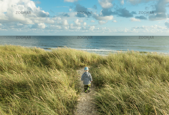 Little 2 year old Boy walking on sand dune path with marram grass to ocean beach. Hvidbjerg Strand, Blavand, North Sea, Denmark.