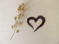 Essbare braun-schwarze Samen vom Ackerhellerkraut und Stängel mit Schötchen