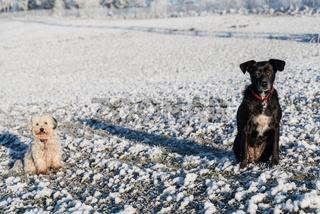 Zwei Hunde voneinander in Corona-Sicherheitsabstand sitzend