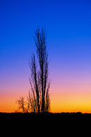 Beautiful sunrise with a leafless tree in silhouette