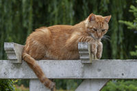 Katze auf einem Holztor