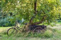 Historisches Fahrrad auf einer romantischen Streuobstwiese, Mecklenburg-Vorpommern, Deutschland