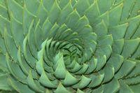 Aloe 5.jpg