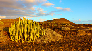 Gaunt landscape with cactus in the south of Tenerife