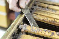 Bienenhonigproduktion