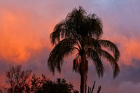 Tropical sunset sky with palm tree