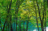 Beautiful landscape pond trees backlight