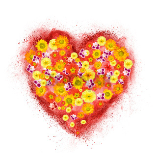 red heart made of powder explosion with flowers isolated on white