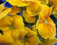 colorful flowers closeup