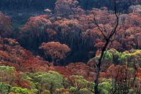Burnt bush land after summer fires in Australia