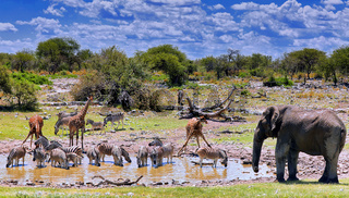 Andrang am Wasserloch, Etosha-Nationalpark, Namibia | rush hour at the waterhole, Etosha National Park, Namibia