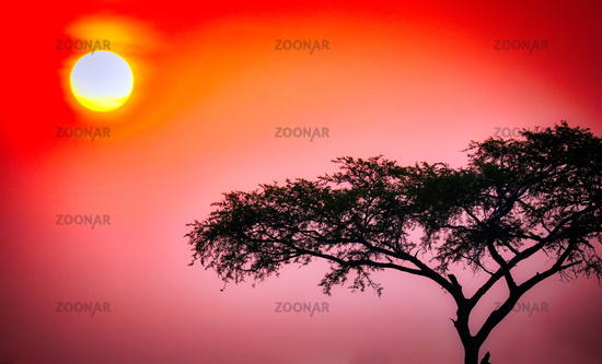 Sonnenaufgang im Murchison Falls Nationalpark Uganda | Sunrise at Murchison Falls National Park Uganda