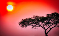 Sonnenaufgang im Murchison Falls Nationalpark Uganda | Sunrise at Murchison Falls National Park Uganda