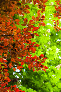 Herbst in Deutschland, Wald
