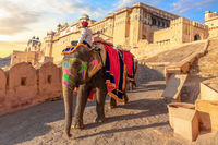 Riding an elephant in Amber Fort, Jaipur, Rajasthan, India
