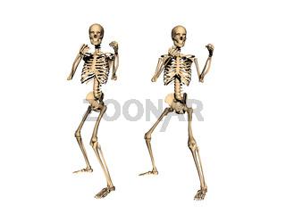 Boxkampf zwischen Skeletten