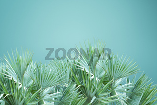 Abstract palm tree leafs background isolated over green background