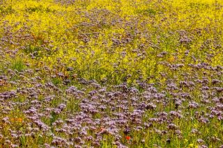 Blumenwiese für Insekten