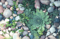 Garden design with succulents and stones