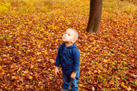 Cute sad toddler boy in autumn forest