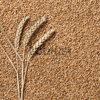 Weizen Hintergrund