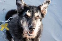 Hund am Strand von Amrum