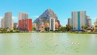 Urban skyline of Calpe, Penon de Ifach or Penyal de Ifac rock, salt lake with flying flock of flamingos birds, blue sky, sunny day, drone point of view. Costa Blanca Spain