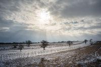 Wintersun on snowy vineyards in Burgenland Austria