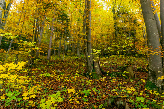 Forest fall autumn leaves and hiking concept