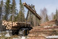 Logger with robotic arm lifts logs in winter woods