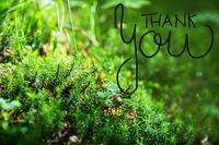 Green Fir Branches, Grass, Calligraphy Thank You