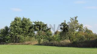 Feldrain mit alten Obstbäumen im September
