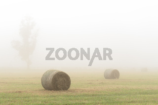 Hay bales in a foggy field in country NSW Australia